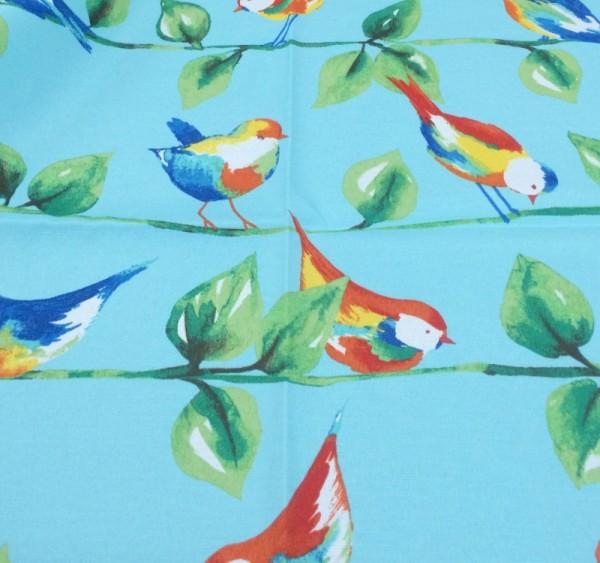 Curious Bird-Sky